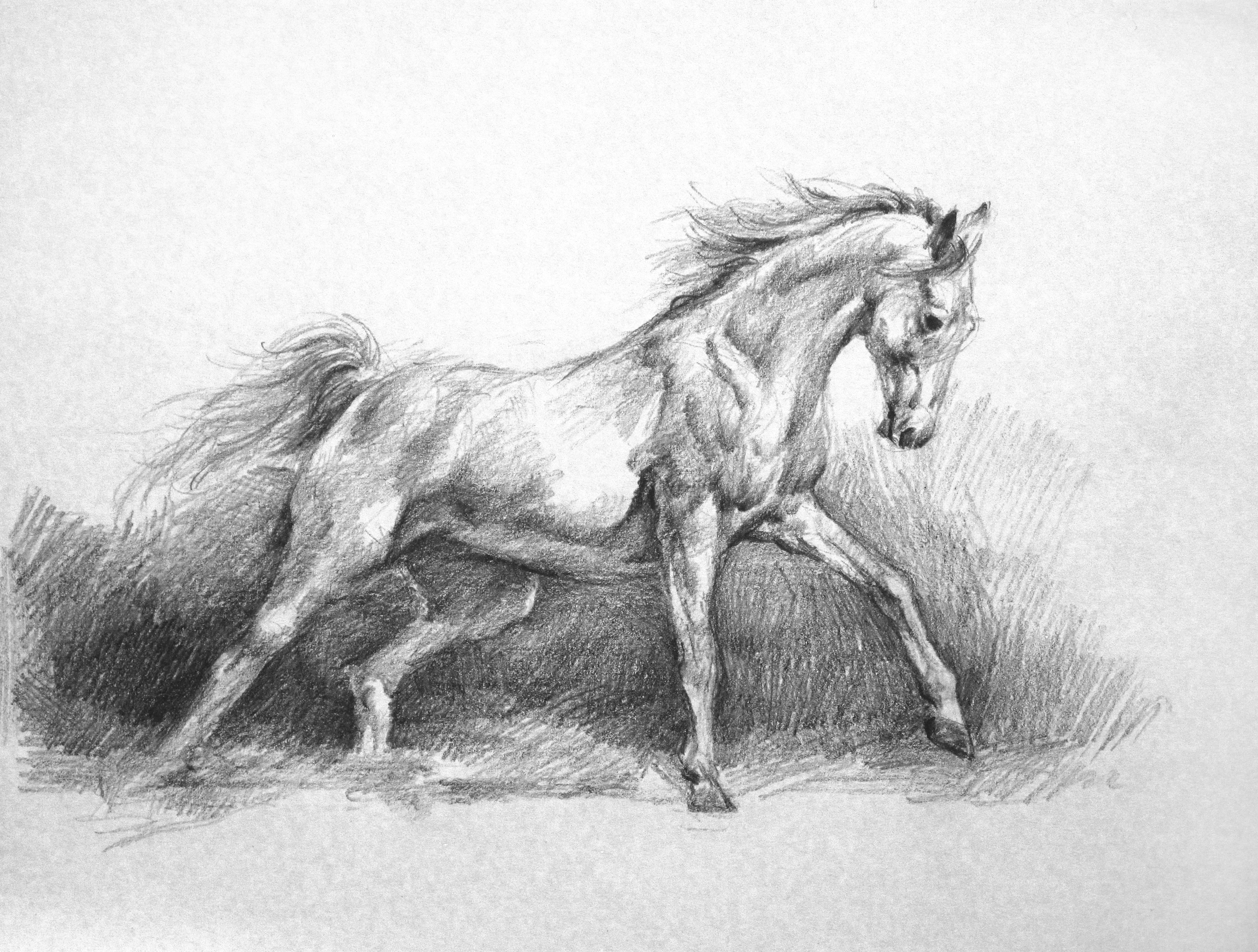How To Draw A Horse: Horse