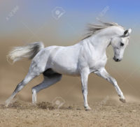 horse_picture_full