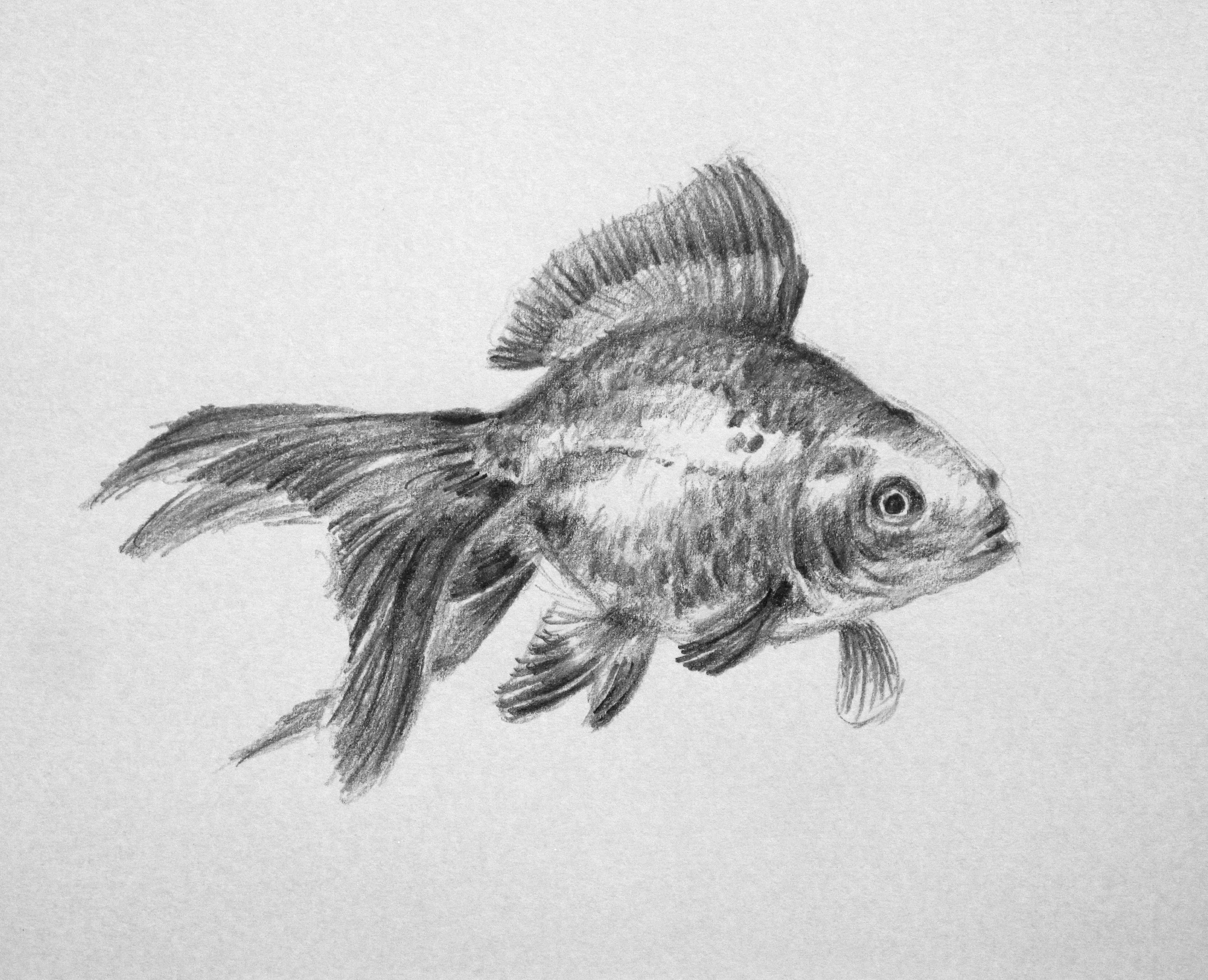 This is a picture of Sizzling Realistic Fish Drawing